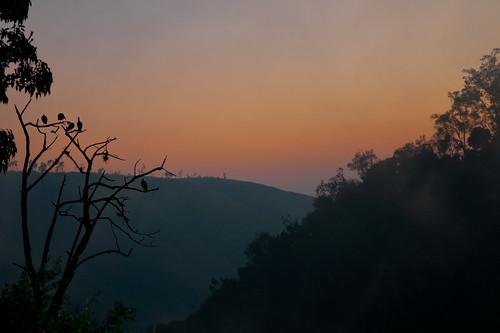 africa bridge tree silhouette fog sunrise geotagged silhouettes boom kenia ferdi djoser plegadisfalcinellus zonsopkomst thompsonfalls blackibis nikkor1755f28 watervallen nyahururu nikond90 zwarteibis ferdisworld 70meterhoog 70metershigh keniaentanzaniareis2011 geo:lat=0046998 geo:lon=36375818