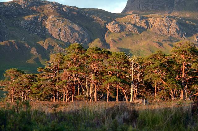 Evening Sun by Loch Maree