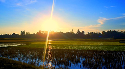 Rice paddy fields at Dawn | by T@R