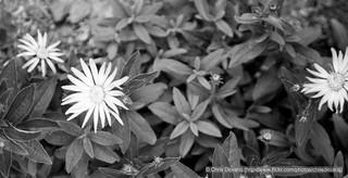 IMG_1742 | by chrisdevaraj