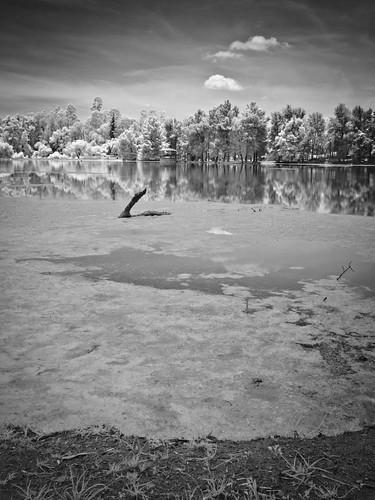 El nadador.