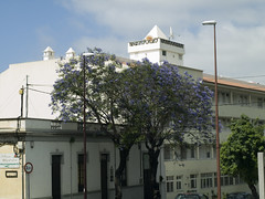 Pulau Tenerife