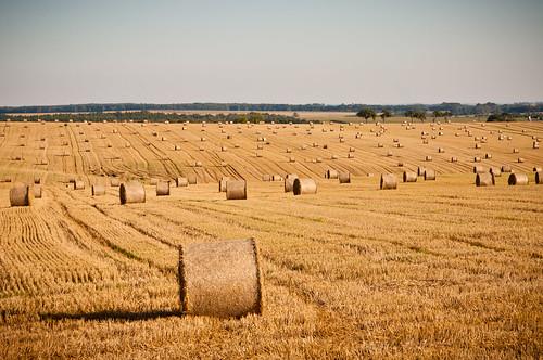nature field landscape nikon natur feld straw area bales bale tamron landschaft stroh strohballen d90 baleofstraw nikond90