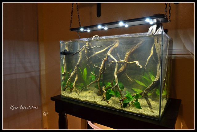 0811 ~ New Amazon River Bank Biotope Aquarium