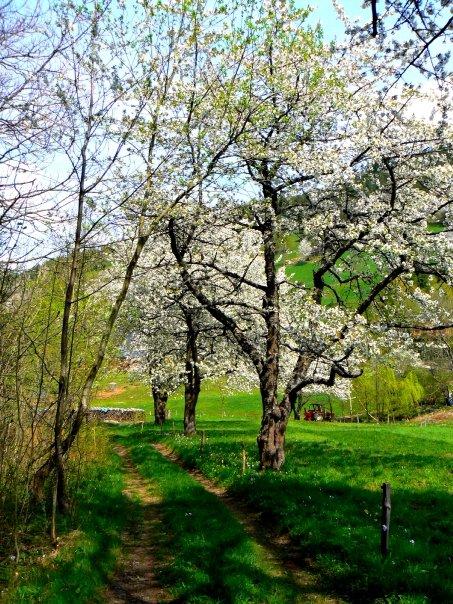 Le printemps sur les hauteurs d'Orbey