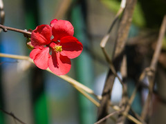 las primeras flores