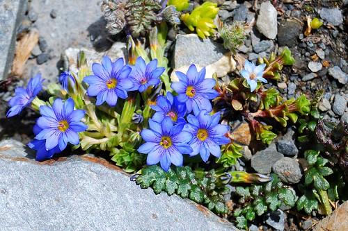 Flores a 5.059 m de altitud   by NuriArT