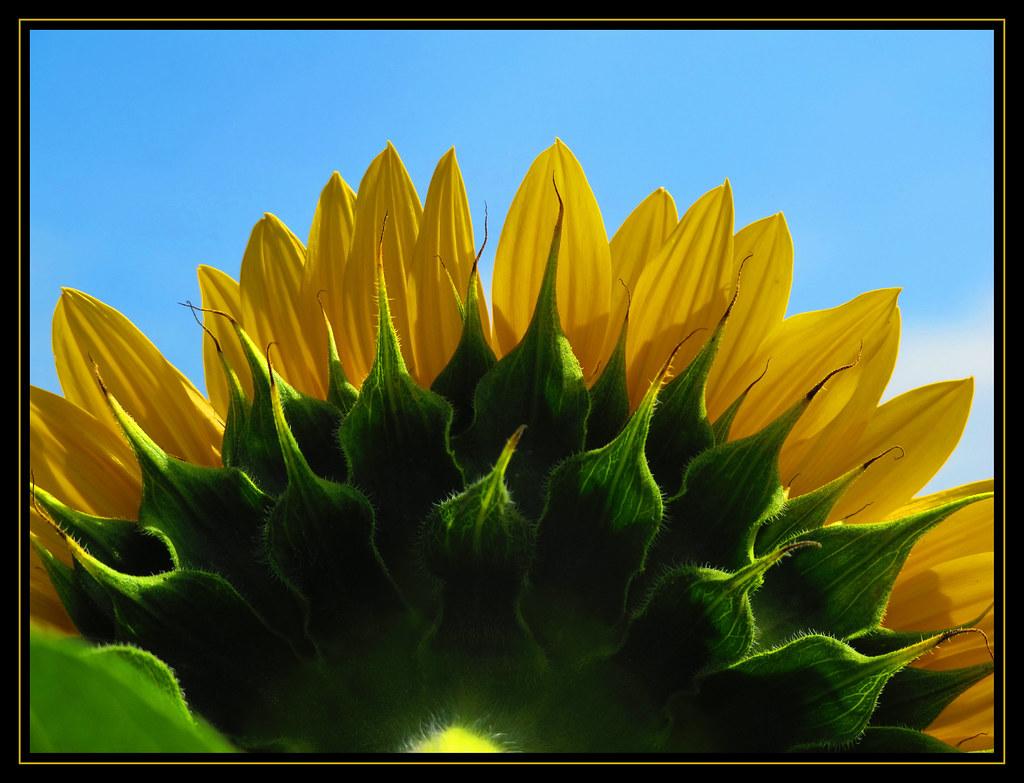 244 - September 1 2011 - green-yellow-blue