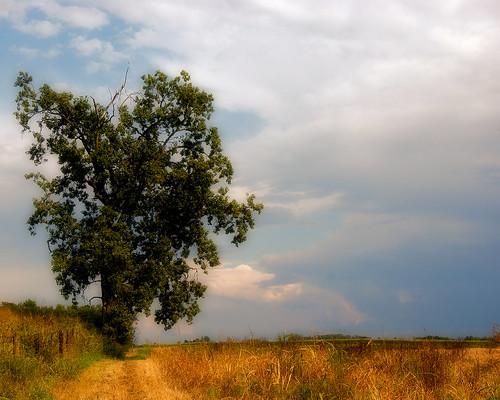 ohio sky cloud tree field fence fairfieldcounty stoutsville