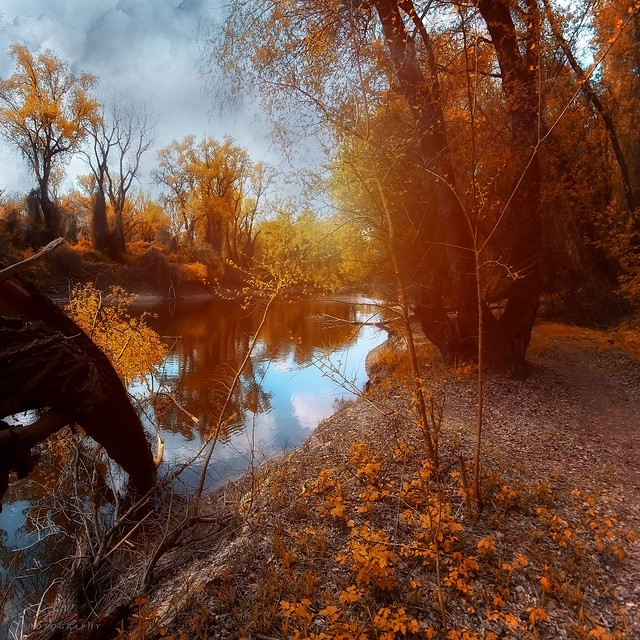 autumn trees by the river - EXPLORED 19/09/11