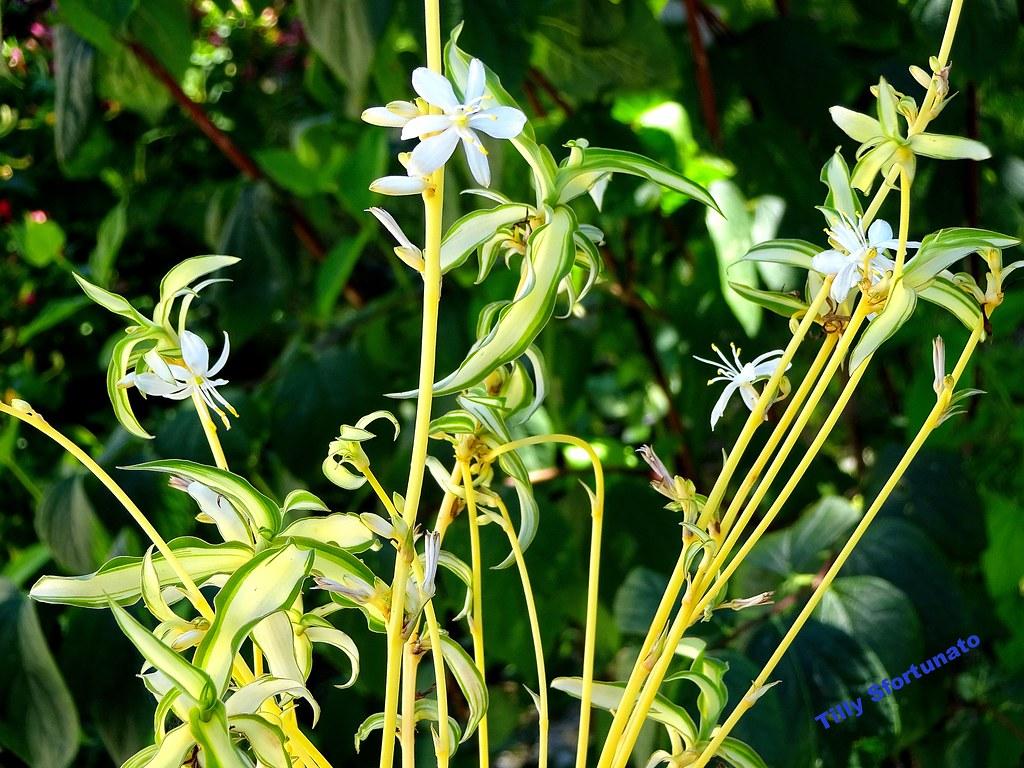 Piante Con Fiori.Una Piccola Pianta Con Fiori Small Plants With Flowers Flickr