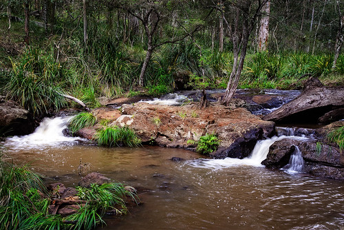 trees water creek forest landscape stream gums queensland ferns runningwater rapid eucalypts springcreek rockpools gumtrees mainrangenationalpark nikon2401200mmf40 nikond610