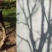 Tree shadow by Spannarama