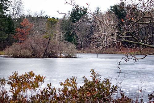 outdoor landscape winter pond trees frost frozen island grass snow ice cold holden arboretum nikon kirtland ohio