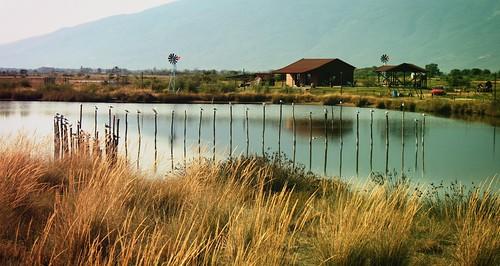 lake grass seagull greece neipori