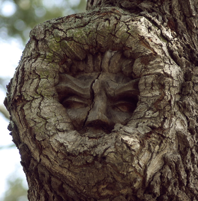 tree spirit on red fern