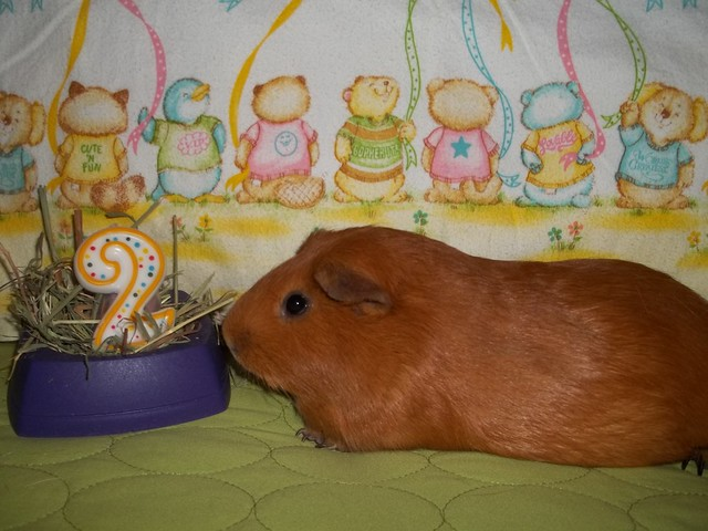 Happy Birthday Brewster!!!