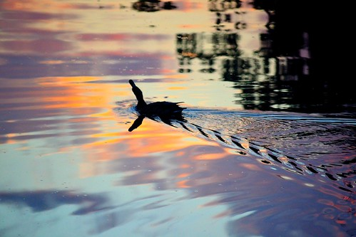 water sunrise dawn duck westerville