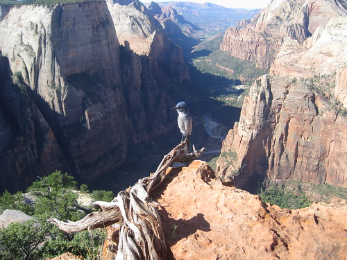 Solitude at Observation Point | by Peter Morville
