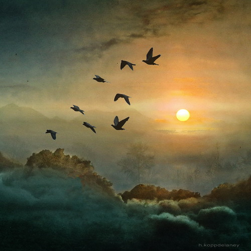 Eight Flying Doves | by h.koppdelaney