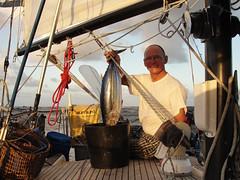 vr, 16/04/2010 - 04:14 - 03. een tonijn gevangen
