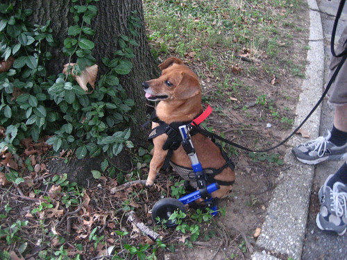Trying to climb a tree in his wheelchair :) | by C Merry
