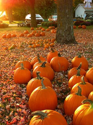 autumn sunset orange sunlight fall leaves minnesota pumpkins rochester explore rochestermn sekapporchard
