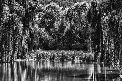 bw okanagan willow swamp vernon blinkagain