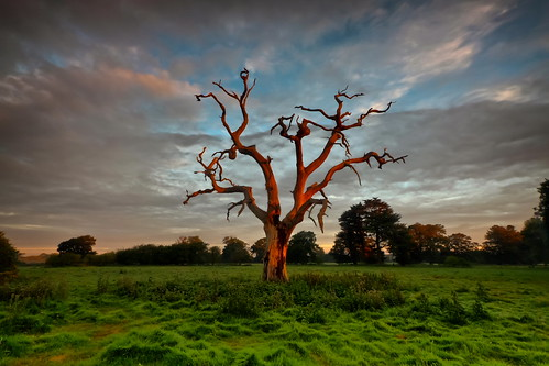 tree clouds sunrise day cloudy chichesterwestsussexengland