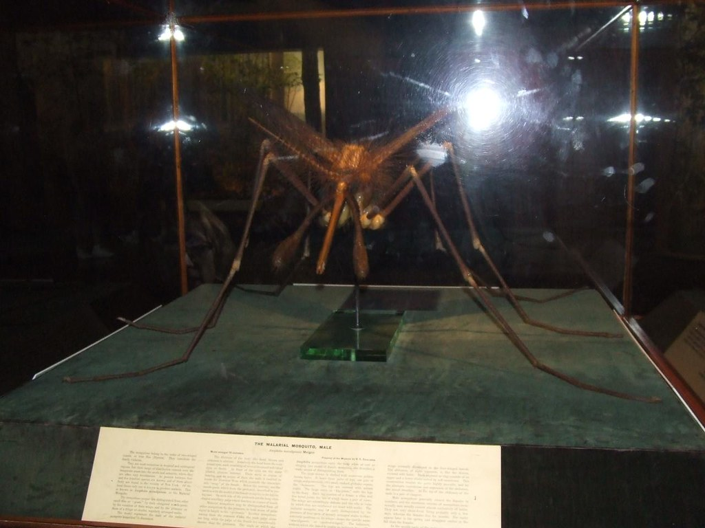 Giant Mosquito - A giant mosquito model from The American Mu… - Flickr Giant Mosquito - 웹