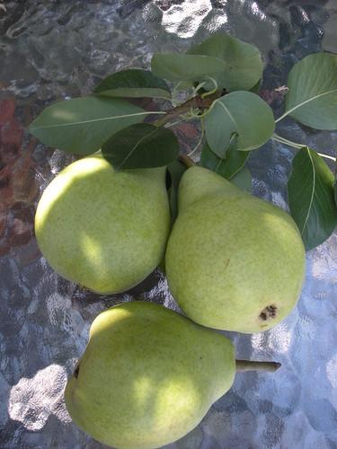 Pears   by HarmonyArtMom