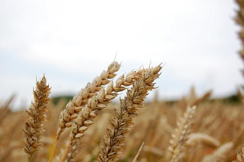 Grain   by Marc Di Luzio