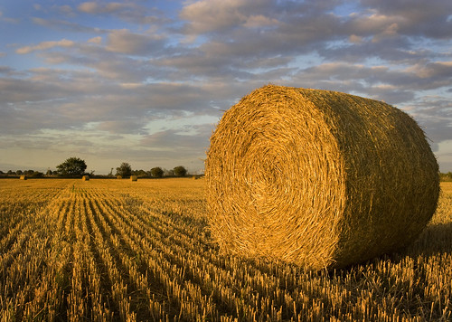 field harvest doncaster barnbydun baleshaystraw