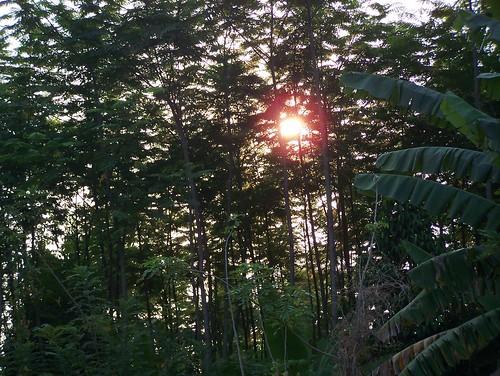 green nature beautiful forest sunrise kodak z650 homogen homogenforest