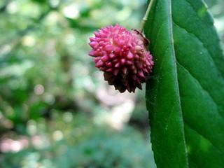 almost ripe hearts-a-bursting