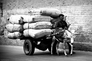 Donkey carriage, Lahore, Pakistan