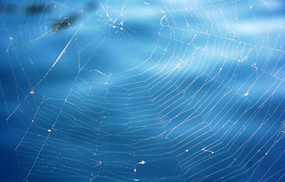 spider web | by kaveh096
