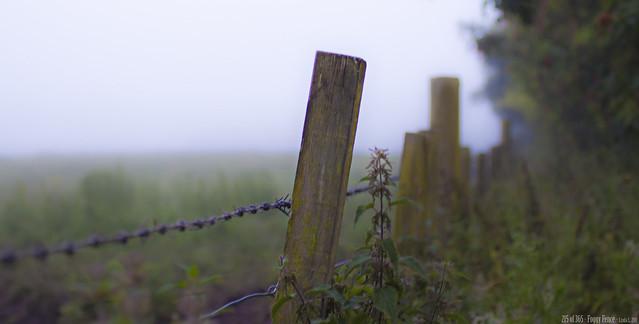 215 of 365 - Foggy Fence