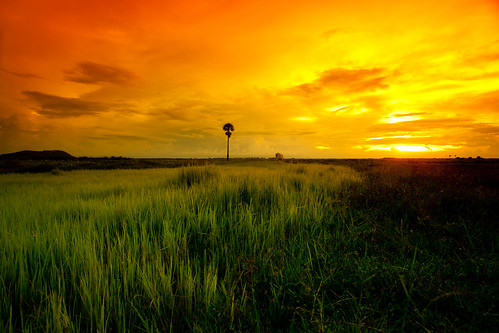 sunset water field clouds cambodia rice siemreap patty