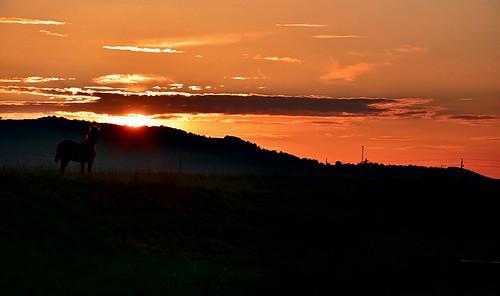 travel autumn sunset summer horse green nature beauty animal sunrise landscape mammal evening nationalpark nikon colorful europe hungary climbing national after nikkor vr 2012 bauty wildlifepark lansdcape 18105mm d5100