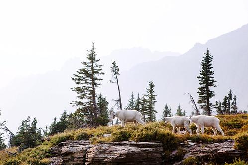 Glacier Nat. Park | by epiøne