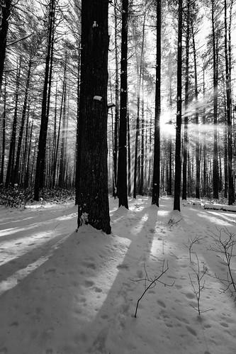 tuckerton newjersey unitedstates us 2017 nj bassrivertownship newgretna bassriverstateforest forest winter trees monochrome blackandwhite