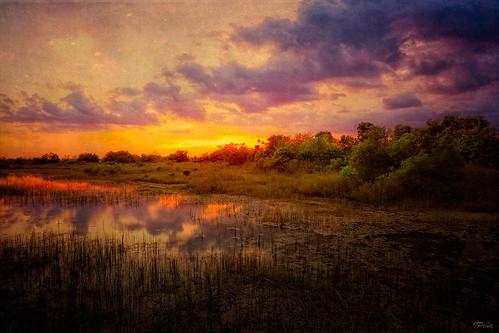 sunset landscape florida parks textures motat pembrokepines colorphotoaward chapeltrail tatot