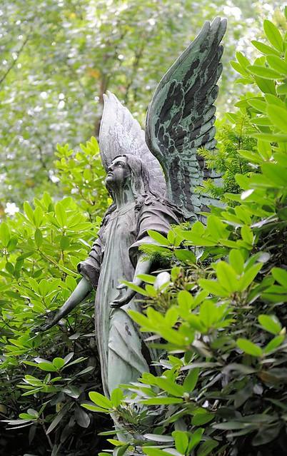 6247 Bronzeengel zwischen Rhododendron - Figur mit Flügeln auf dem Friedhof Hamburg Ohlsdorf.