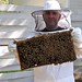 Intro to Beekeeping August 27, 2011