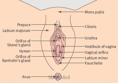 Vulvar abscess