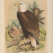 The birds of North America