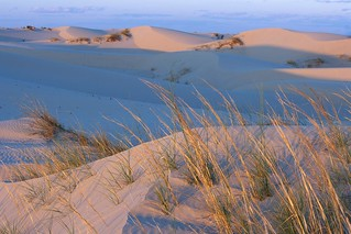 Evening on the Dunes | by AnEyeForTexas