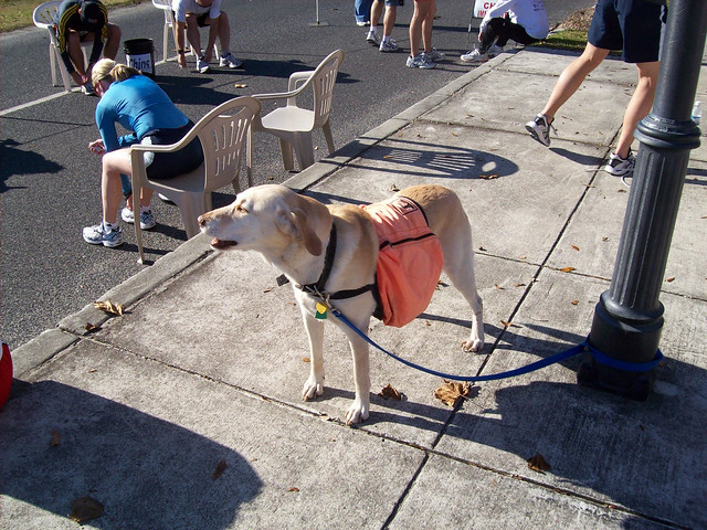 Service Dog... Maybe
