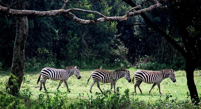 Aberdares,Kenia